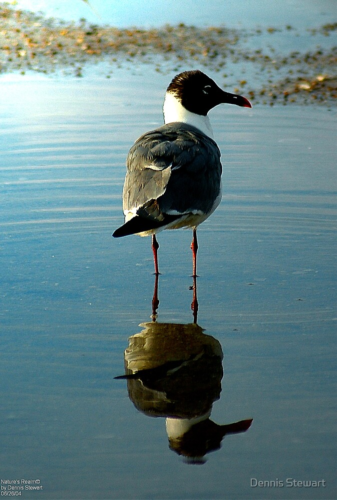 Puddle Gull by Dennis Stewart