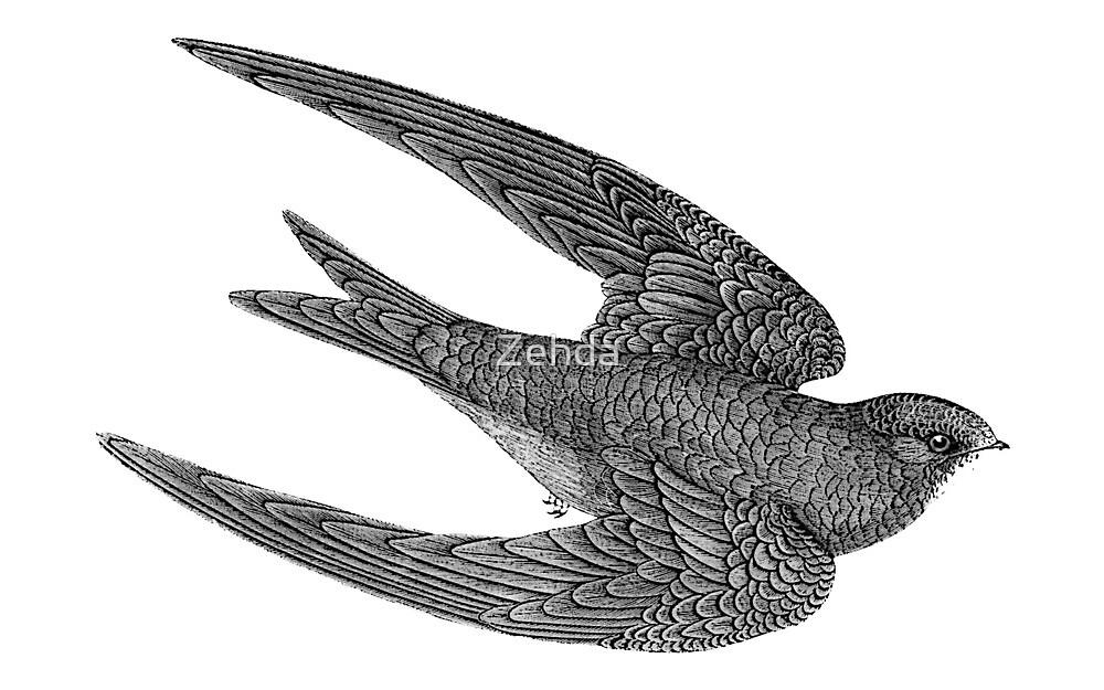 Swift Bird Flying by Zehda