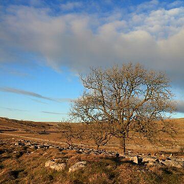 Last Tree Standing by RoystonVasey