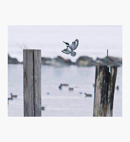 An Elusive Bird Photographic Print