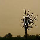 LoneTree5 by mindfulmimi