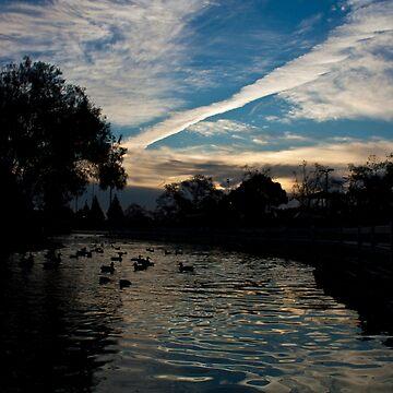 Pond Ducks At Dawn by ReachOne