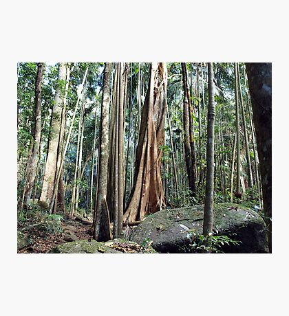 Curtis Falls Rainforest Photographic Print