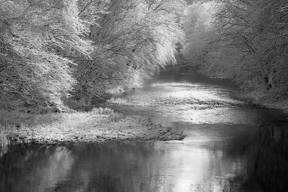 November Snow b&w by Michael  Dreese