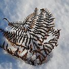 A Cold Fern by dougie1