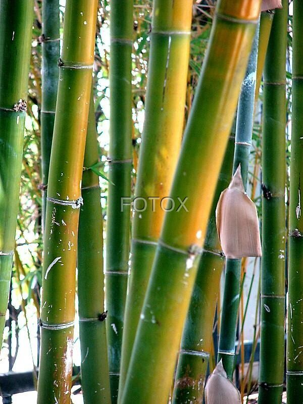 Bamboo by FOTOX