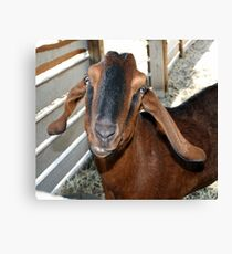 Smile and Say Cheese Canvas Print