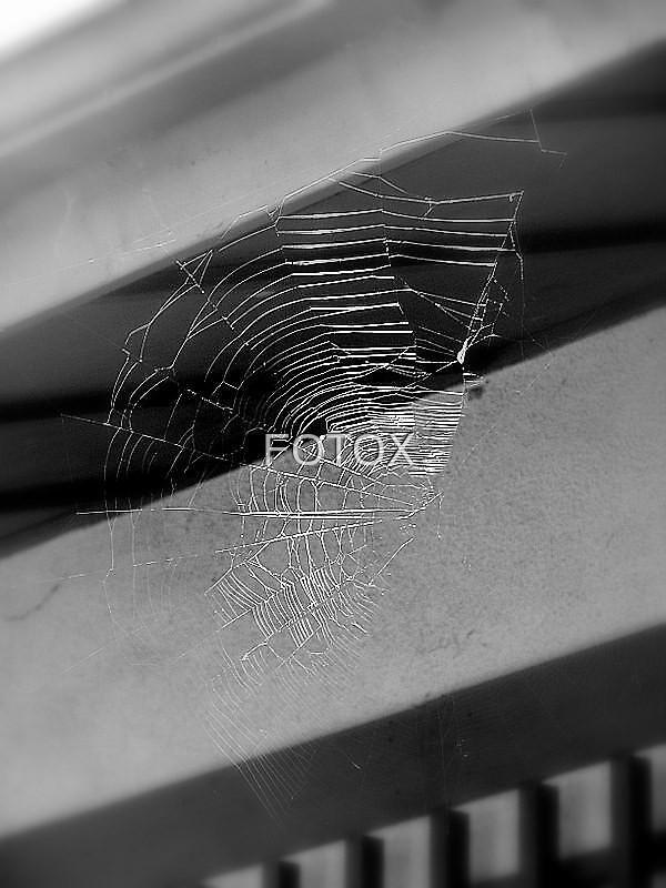 The Web by FOTOX