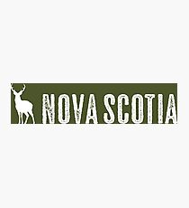 Deer: Nova Scotia, Canada Photographic Print