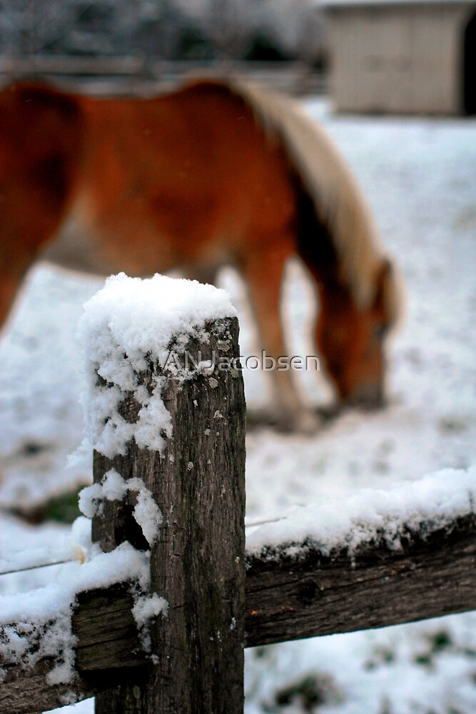 horse fence by ANJacobsen