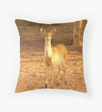 Young Fawn Deer Throw Pillow