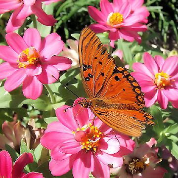 Pretty In Pink by MrsBaker