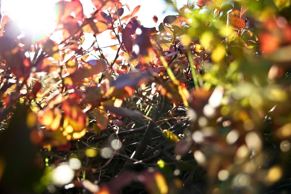 sprigs by Rebecca Tun