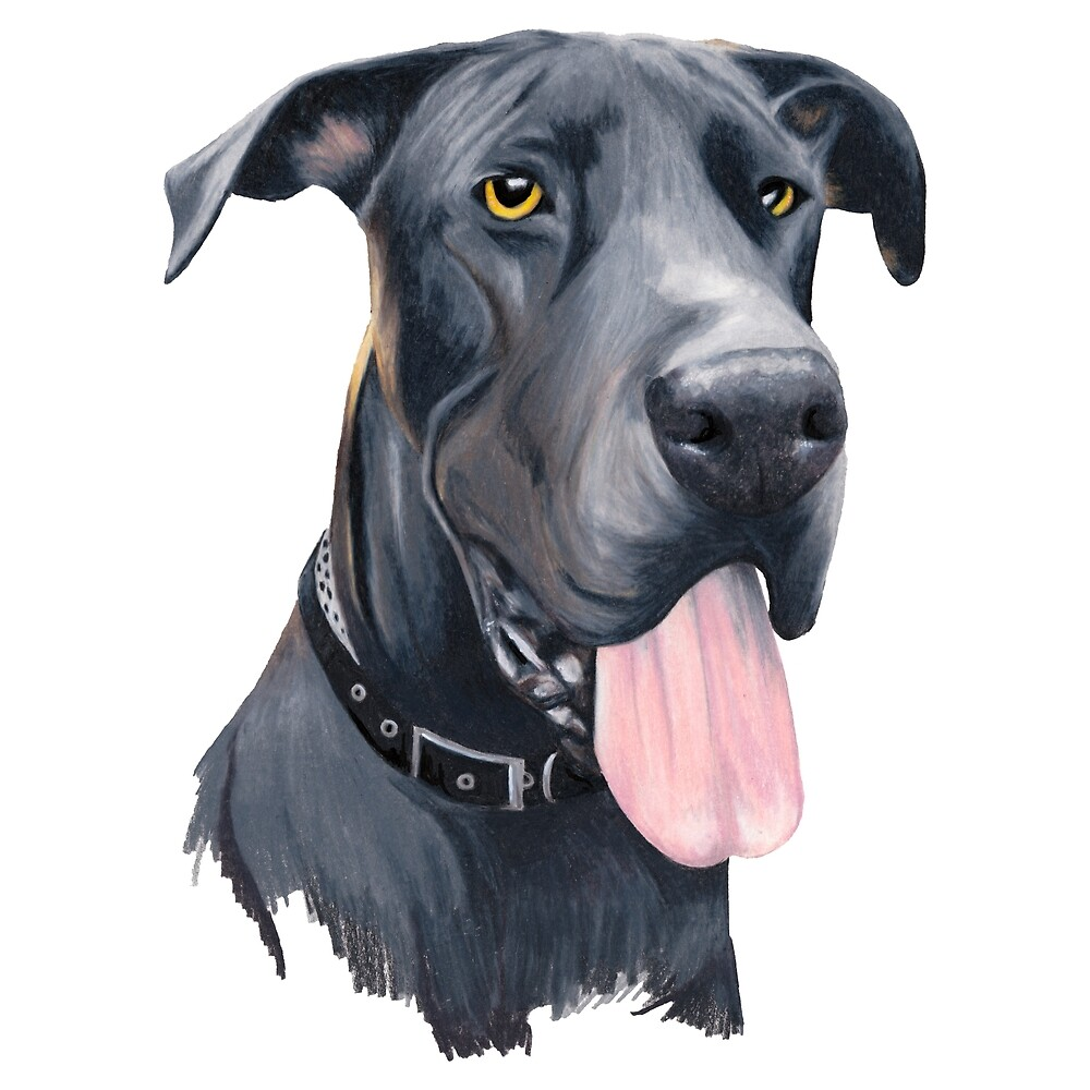 Hank - Great Dane by Apatche Revealed