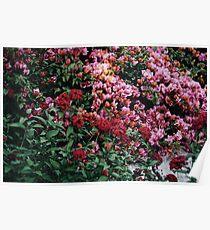 flowers in disneyland Poster