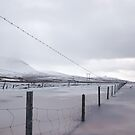 ice land by Rebecca Tun