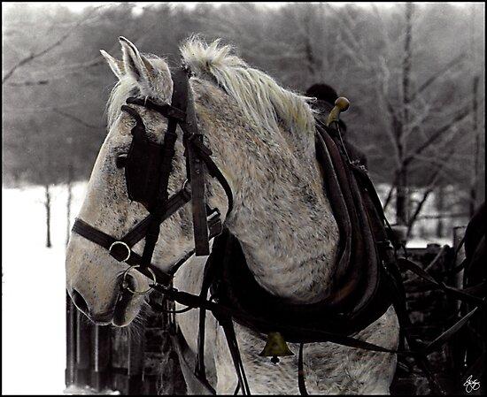 The Draft Horse by Wayne King
