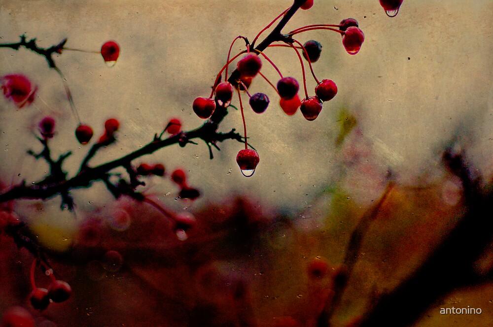 November Rain by antonino