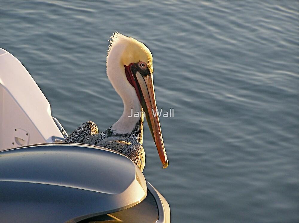 Pelican on Board by Jan  Wall