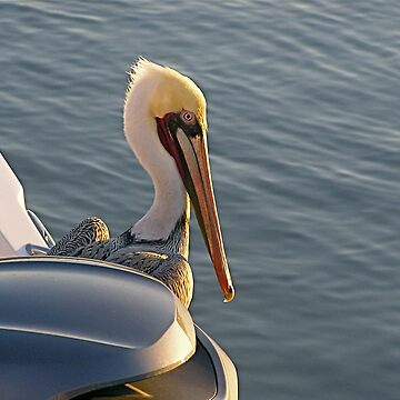 Pelican on Board by jwphotos