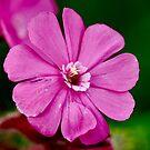 NDVH Flowers 5 by nikhorne