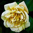 NDVH Flowers 8 by nikhorne