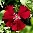 NDVH Flowers 9 by nikhorne