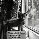 NDVH Kitten by nikhorne