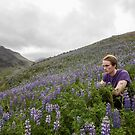 wild Lupine - flora and fauna of Iceland by Rebecca Tun