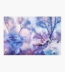 Winter fairy tale II Photographic Print