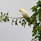 A Most Majestic Bird by Anthony Davey