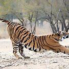 Tigress Stretch by Pravine Chester