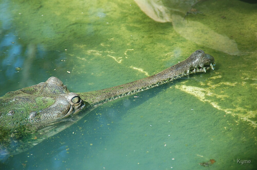 Gavial Alligator by Kyme