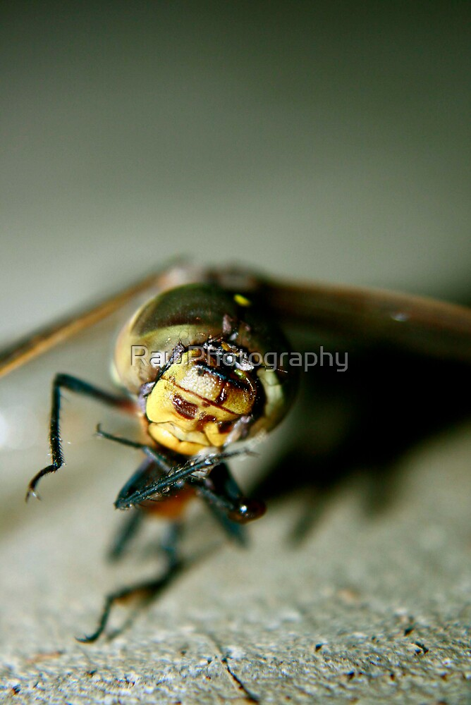 Dragon Fly by RawPhotography