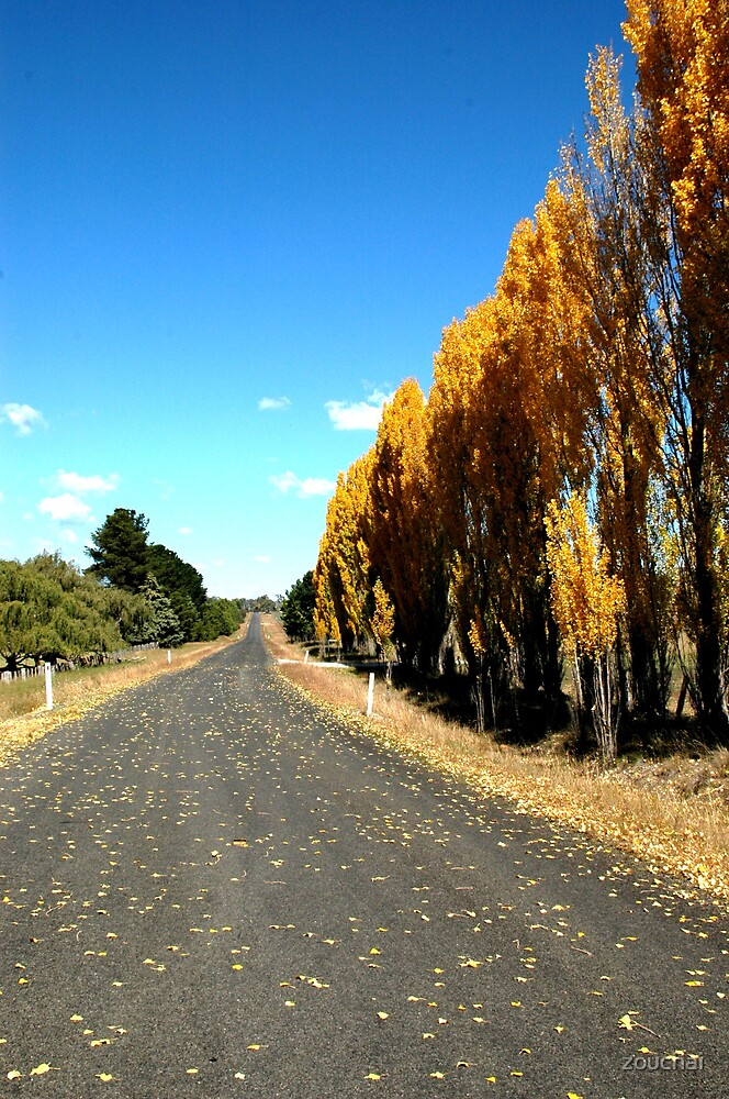 Poplar Road by zouchai
