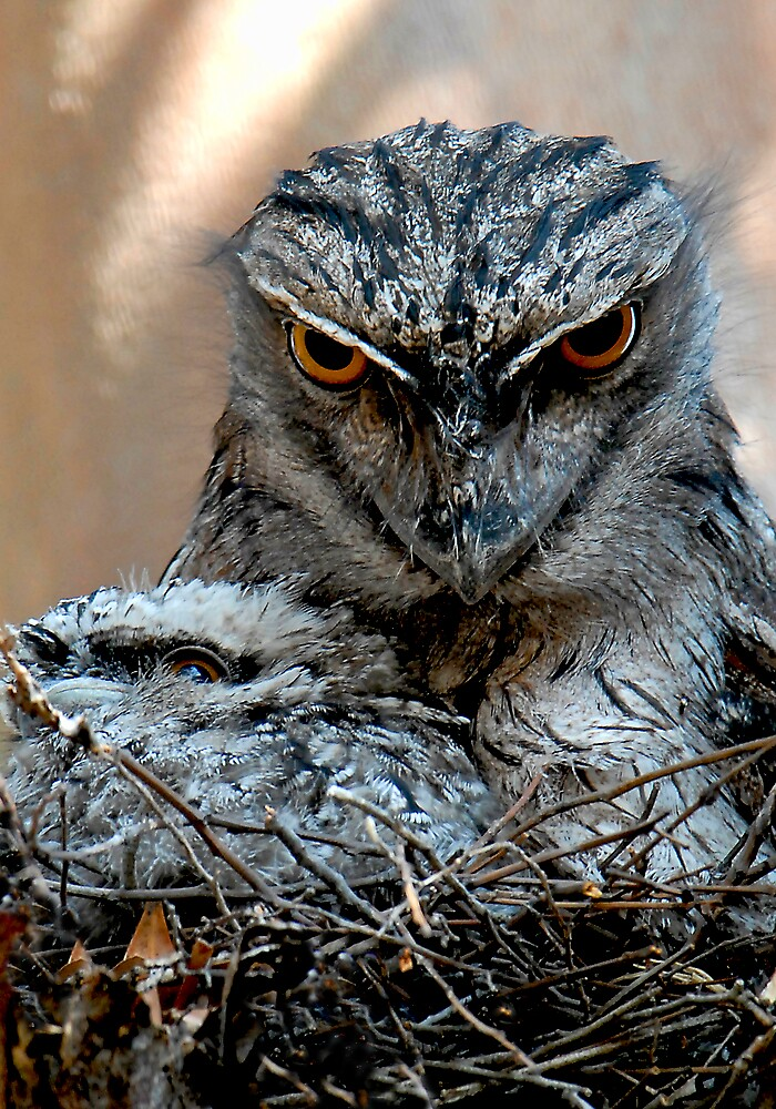 Tawny Frogmouth and baby by gazzas