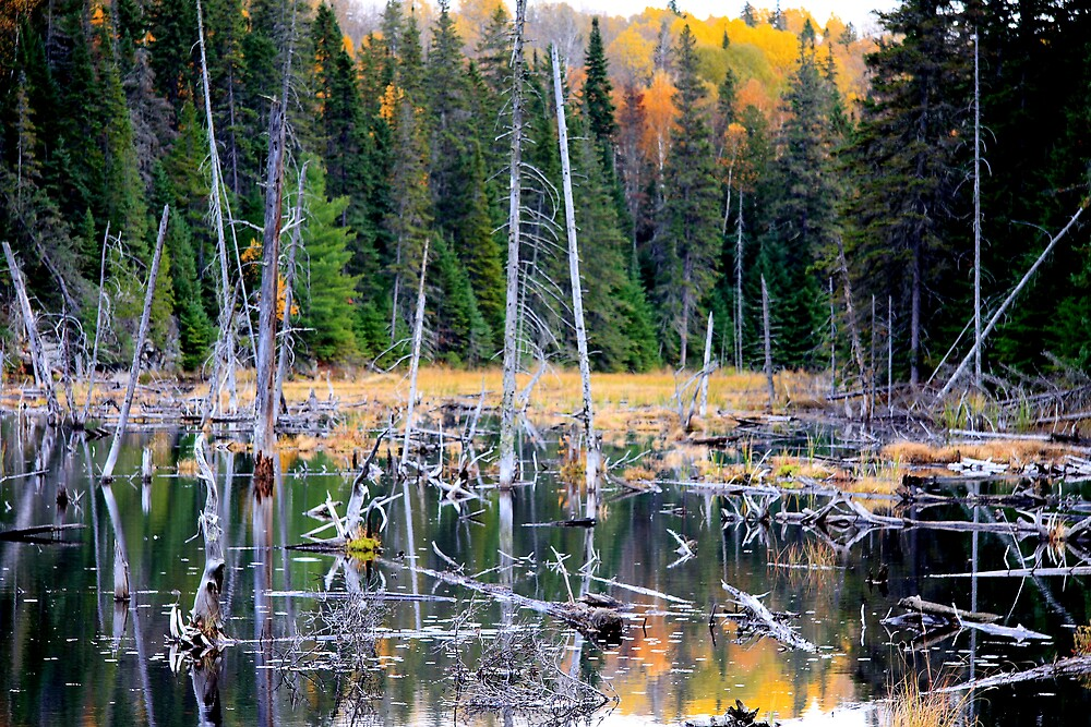 Beaver Pond by Dave Law