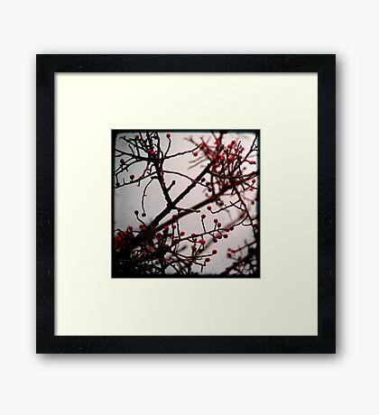 Maroussia Framed Print