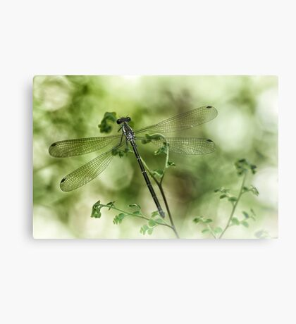 A tiny one hidden in the green by the pond Metal Print