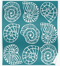 Sea shells - white on seagreen background Poster