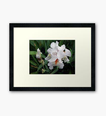Iris From Above Framed Print