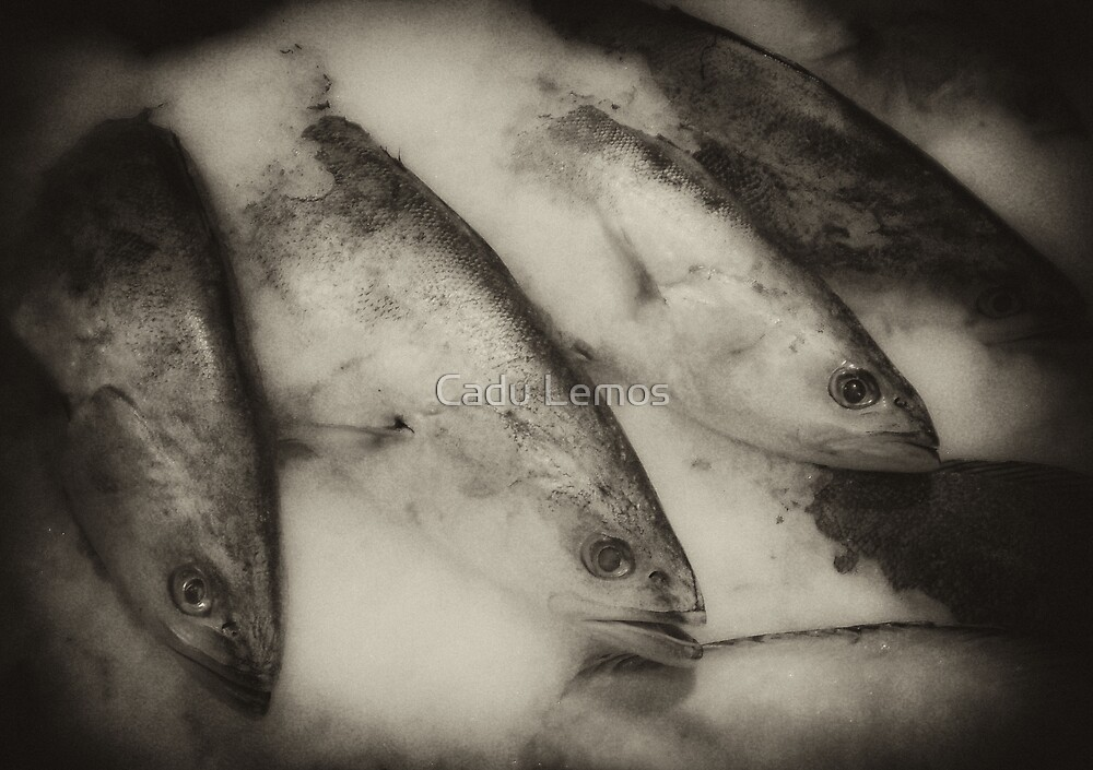 fisheye mono 3 by Cadu Lemos