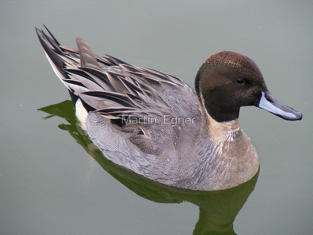 Duck On Water by Martin  Egner