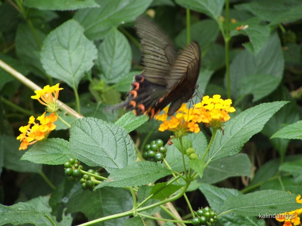 wings by kalindahiggs