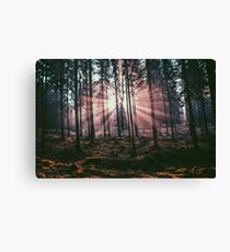 INSIDE THE WOODS Canvas Print