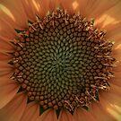 Sunflower Macro II by KSkinner