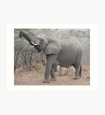 Kruger National Park Trip  Art Print