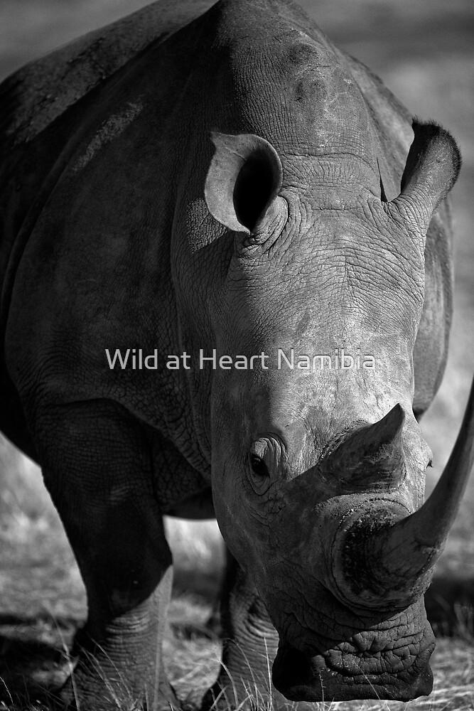 Rhino head to head by Wild at Heart Namibia