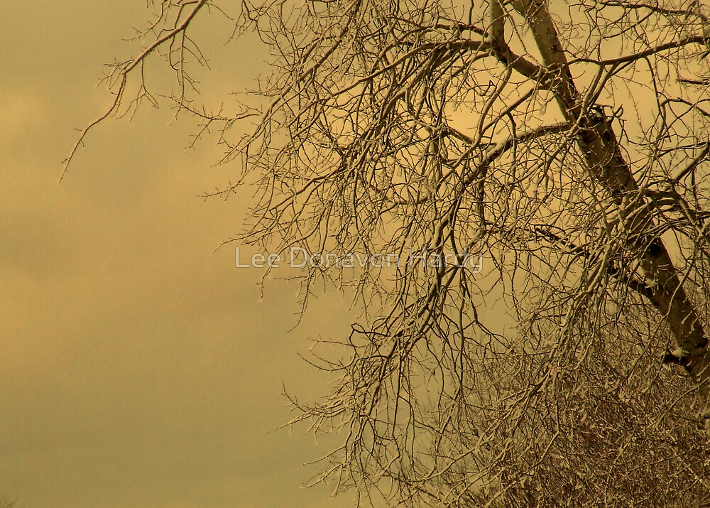 Old Poplar...First Snow by Lee Donavon Hardy