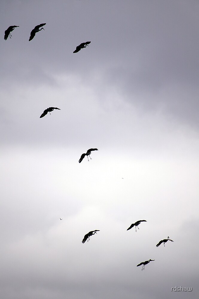 Cranes Flying 11 by rdshaw